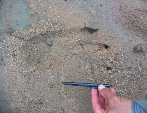 """Limpopo Field Guiding Academy – Learn to be a """"CSI"""" in the bush."""