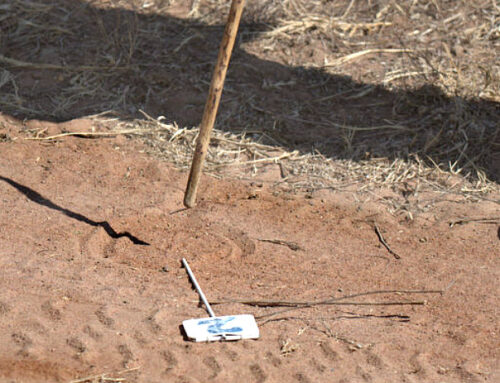 Track and Sign training at Limpopo Field Guiding Academy.